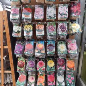 Blumenzwiebeln / Knollen